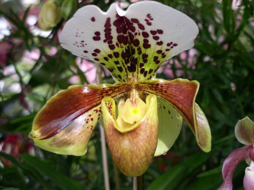 Blume Gewaechshaus Mainau