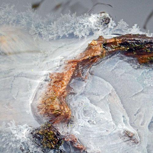 Voile blanchâtre champignon aquatique, bactéries Bois de la Citadelle, Lille, décembre 08