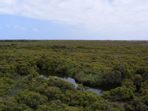 Samphire salt marsh - St Kilda South Australia