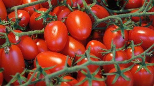 Grape tomatoes on the vine at Ljubljana Central Market
